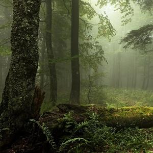 V pralese, po červenej.