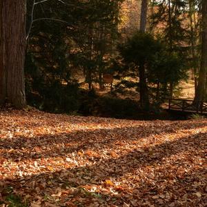 Neskorá jeseň v parku.