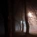Nocna alej v hmle