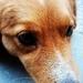 Moj pes Lily