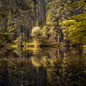 Boubinský prales