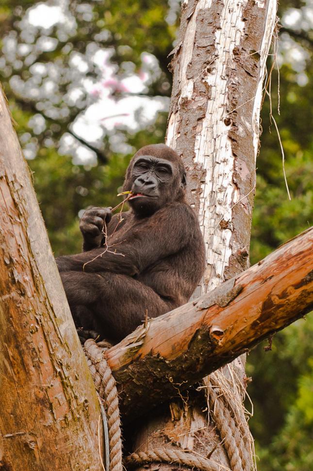 sedím na strome a je mi dobre