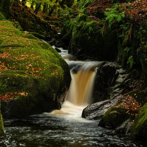 Vlese pri potoku