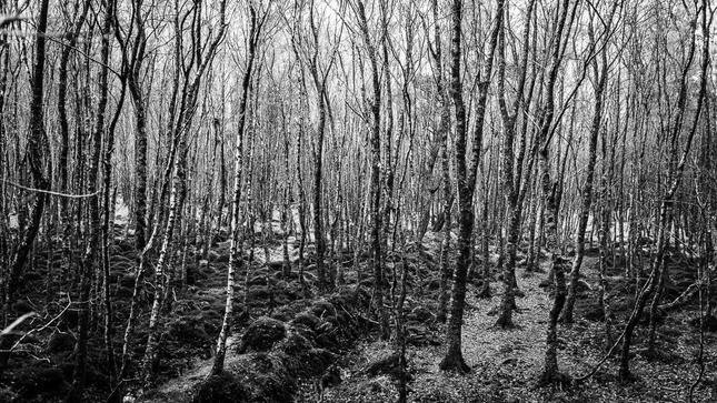 V brezovom lese...