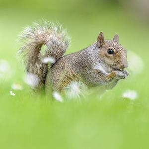 Vevericka popolava 3
