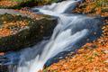 Jesen pri potoku