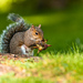 vevericka a orech