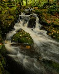 Vlese pri potoku 3