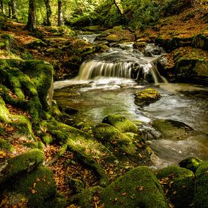 Vlese pri potoku 2