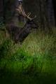 niekde v lese 2