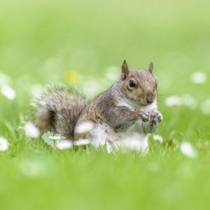 Vevericka popolava 2