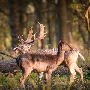 V lese 3...