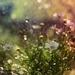V bublinkách