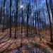 Slanský lesík
