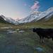 Býček pod horami
