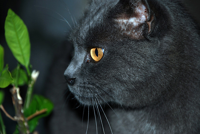 8acd7fa3d mačacie oko - Fotografia - Fotogaléria | ePhoto.sk - foto ...