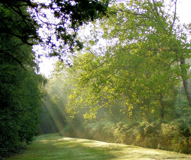 Lesik dnes rano