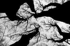 neuróny