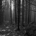 V tajomnom lese ...