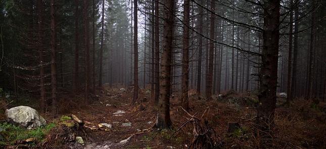 V tajomnom lese II. ...