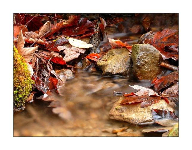 Listy vo vode