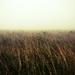 Vo vetre a v hmle