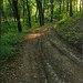 Lesná cestička