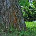Spod stromu