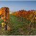 Jesenny vinic