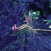 Night dragonfly