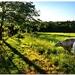 Paša za záhradou