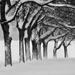 Zimný nástup