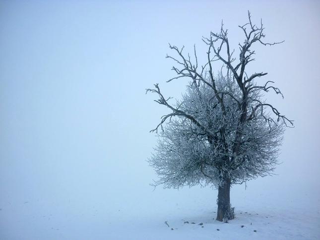 Križenci z hmly