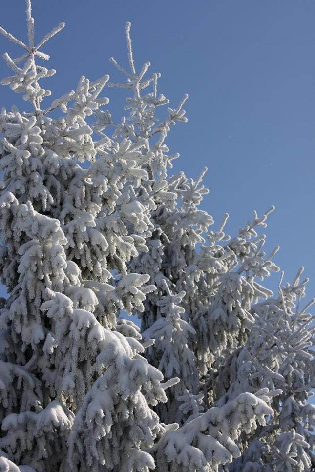 Biele stromy