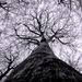 kozmicky strom života