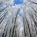 velikáni lesa