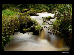 Campsie Fells Waterfall I