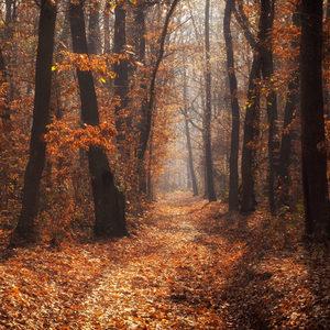 Jesenne ráno