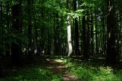 zasvietilo do lesa
