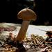 Sex on the mushroom