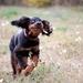 Psie radovánky-nesiem jej kvetin