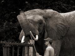 Slon s cvicitelom