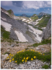 Smädné žlté kvety vzývajú dážď.