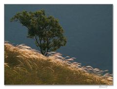 V objatí tráv