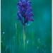 Orchidea na Tatárskej lúke