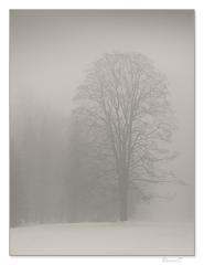 Park v hmle