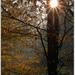 Novembrové ráno v parku