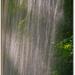 Stromy za závojom vodopádu