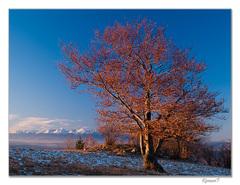 Horiaci strom