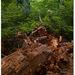 V pralese Stužica